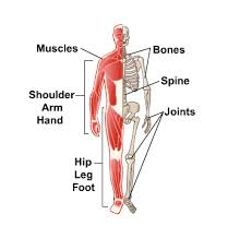 pain body what causes joint and muscle pain certified advanced rolfer