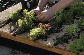 recycled pallet vertical garden u2013 design sponge