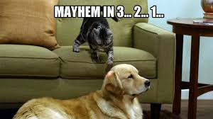 Dog Cat Meme - cat memes 25 ways to laugh cattime
