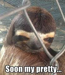 Funny Sloths Memes - the story of hanukkah as told by sloths animal fun funny