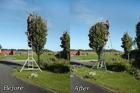 tree pruning trimming services hamilton waikato groundzone