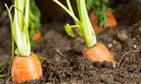 Natural Pesticides For Vegetable Gardens by Certified Naturally Grown A New Way To Identify Pesticide Free