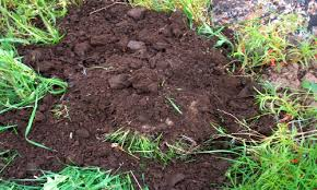 What Type Of Soil For Vegetable Garden - 5 different soil types u2013 know your soil type growth as nature