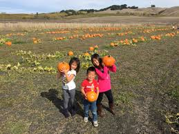 Tolay Pumpkin Patch Petaluma by Img 8645 Jpg