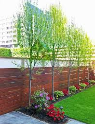 image result for birch tree landscaping commercial building