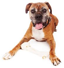 1 year old boxer dog best dog food for boxers