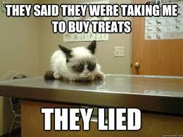 Vet Memes - grumpy cat goes to the vet memes quickmeme