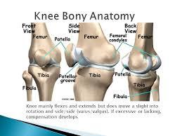 Knee Bony Anatomy The Anatomy Of Running Mechanics Ppt Video Online Download