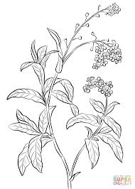 forget me not coloring page free printable coloring pages