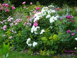 fleurs vivaces rustiques jardin fleurs vivaces fleurance com