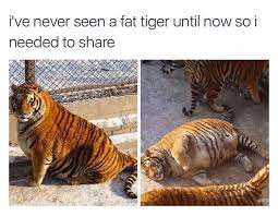 Tiger Meme - fat tiger meme by joewie0077 memedroid