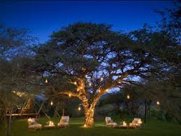 16 best lights in trees images on