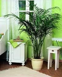 plante d駱olluante chambre petit guide des plantes dépolluantes santé au quotidien