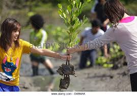 planting trees stock photos planting trees stock