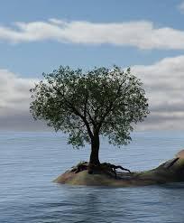 free illustration water tree island sea free image on
