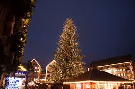 free images light evening fir lighting tree