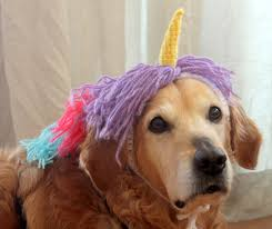 halloween for dogs costumes unicorn dog costume dog unicorn unicorn mane unicorn hat for