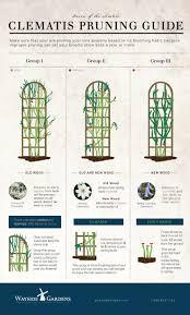 clematis pruning guide jpg