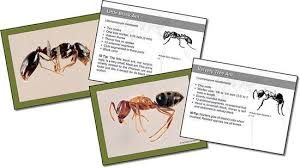 pct pest technology store pct ant id flash cards