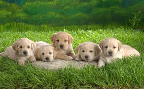 cute dog wallpapers puppy wallpapers dogs wallpapers 7013331 fanpop dogs lovers