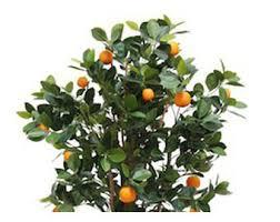 plantart artificial fruit trees faux lemon orange trees