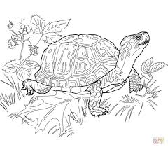 coloring pages draw a turtle olegandreev me