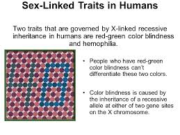 Blindness Chapter Summaries 1 The Trait Being Traced In This Pedigree Is Dominant How Would