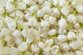fragrant flowers what are some of the most fragrant flowers in the world quora