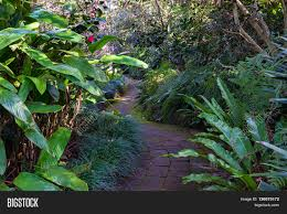australian garden flowers bended path tropical garden image u0026 photo bigstock