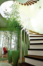 Modern Houseplants by Indoor Plants And Mini Garden Interior Design Ideas Modern Green