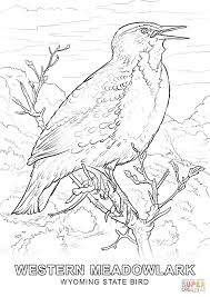 wyoming state bird coloring page free printable coloring pages