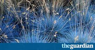 gardens ornamental grasses and style the guardian