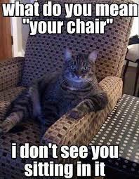 Meme Chair - your chair beheading boredom