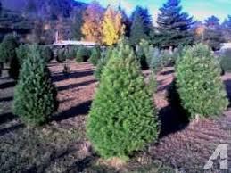 u cut christmas trees and fresh wreaths for sale springfield