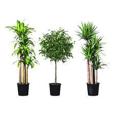 decorative indoor plants interior interior design flower pot decorating online png planting
