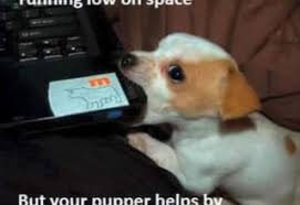 Funny Puppy Memes - funny pet memes archives page 3 of 12 what breed is it