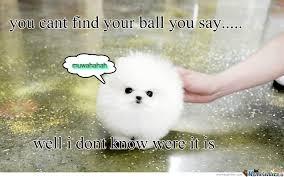 Pomeranian Meme - evil pomeranian muwahahaha by genevahitzel meme center