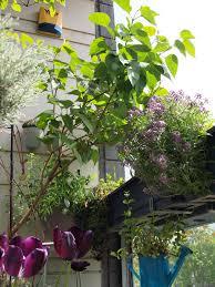 file balcony garden dublin jpg wikimedia commons