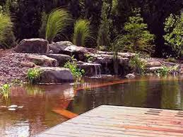 natural swimming pool designs 1000 ideas about natural backyard
