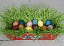 naturally dyed easter eggs magnesium blue