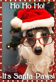 12 dog holiday photo ideas images funny christmas card ideas