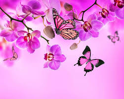 orchid pink blossom flowers beautiful butterflies orchid flower