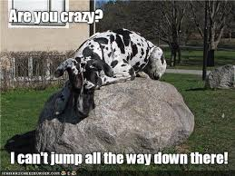 Great Dane Meme - 17 great danes who are total scaredy cats cuteness