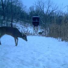Stand Up Hunting Blinds Deer Hunting In Cold Weather Banks Outdoors