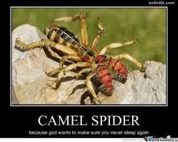 Camel Meme - the camel spider by brianben123 meme center