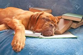 Tired Work Hours Tired Of Studying Images U0026 Stock Pictures Royalty Free Tired Of