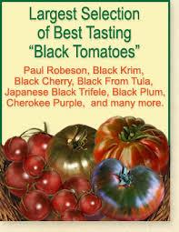 tomato seeds organic heirloom tomato seeds tomatofest
