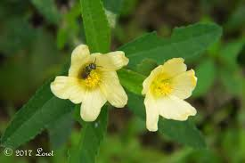 native indian plants what florida native plant is blooming today daily photo of
