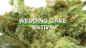 wedding cake leafly 420 central strain reviews wedding cake creative ideas