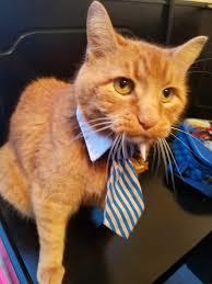 Grumpy Cat Meme Generator - business cat meme generator best business 2018